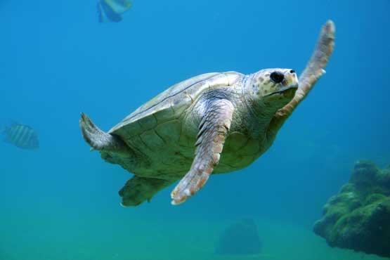 turtle phuket