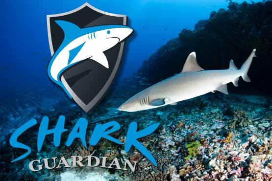 shark-guardian-oceanic-dive-center-main