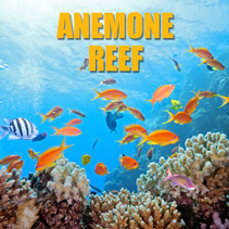 Anemone Reef – Phuket Day Trip Dive Site