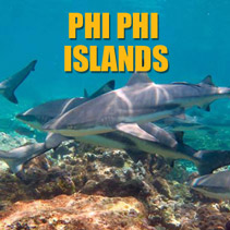 Reef Sharks at Phi Phi Islands