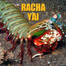 racha yai divesite phuket