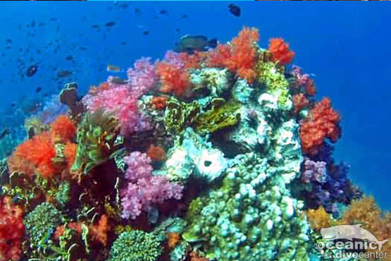 shark point phuket