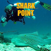 shark point divesite phuket
