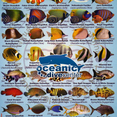 Fish ID Slates & fish ID poster at Oceanic Dive Center