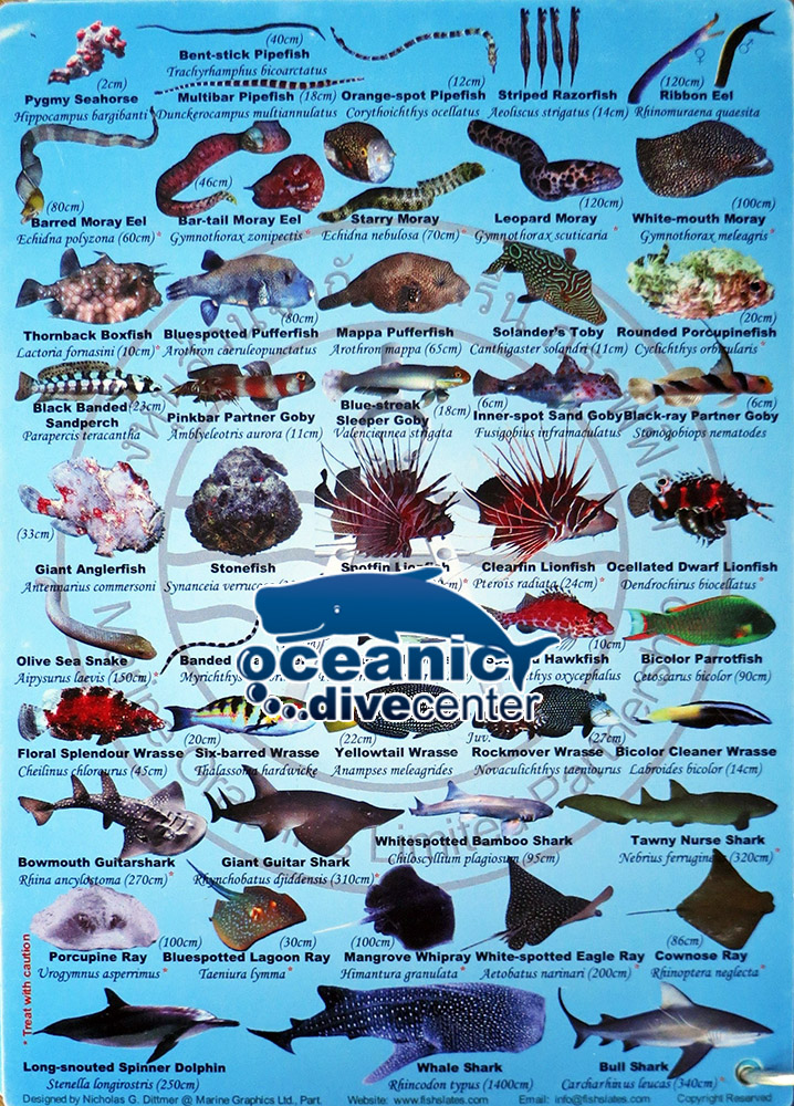 Blue Door Fish Resturant South Beach
