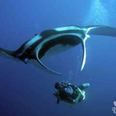 scuba tour agency oceanic dive center similans manta ray phuket