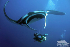 scuba-tour-agency-oceanic-dive-center-similans-mantaray-kata-phuket