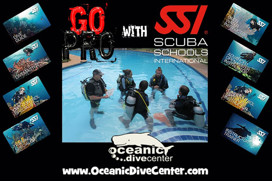 Get Your Ssi Open Water Certification Cards At The End Of Your Last