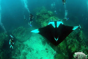 Manta Diving Phuket Scuba