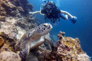 Phuket Scuba Diving with Turtles