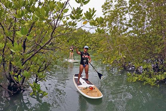 Paddle through the mangroves